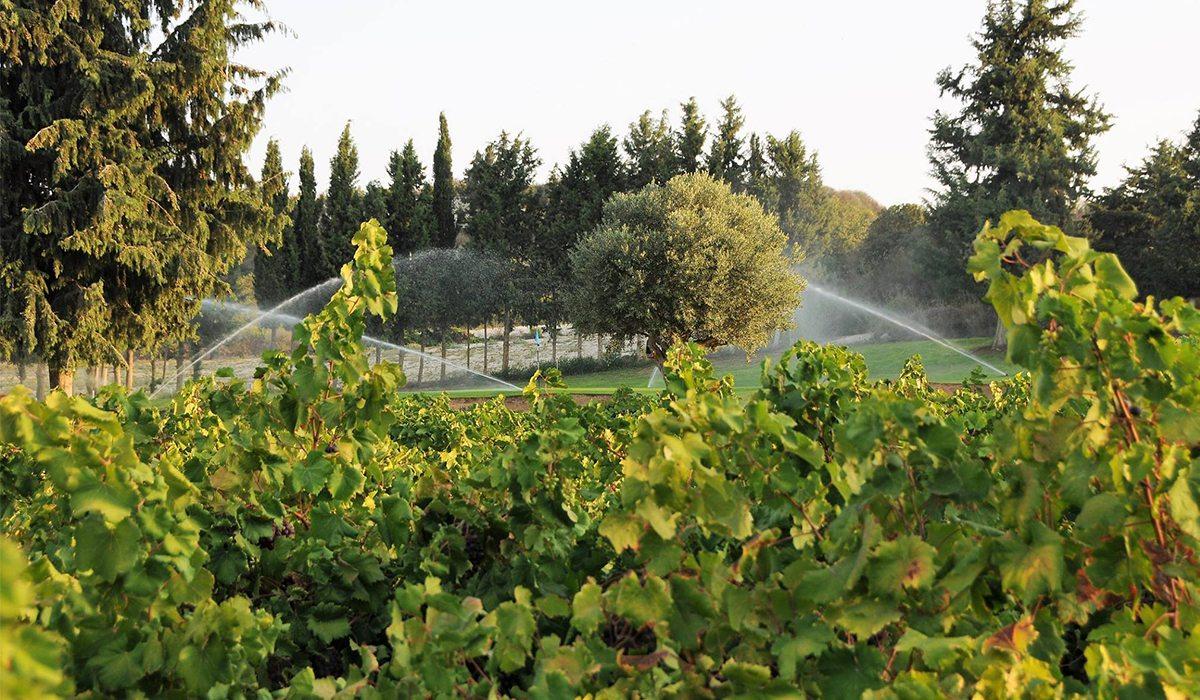 Minthis Hills Wine